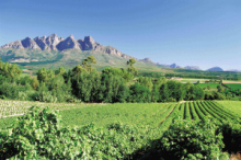 Vineyards of Stellenbosch and the Cape Winelands