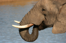 Elephants in the Addo Elephant National Park