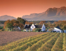 Wine valley of Paarl